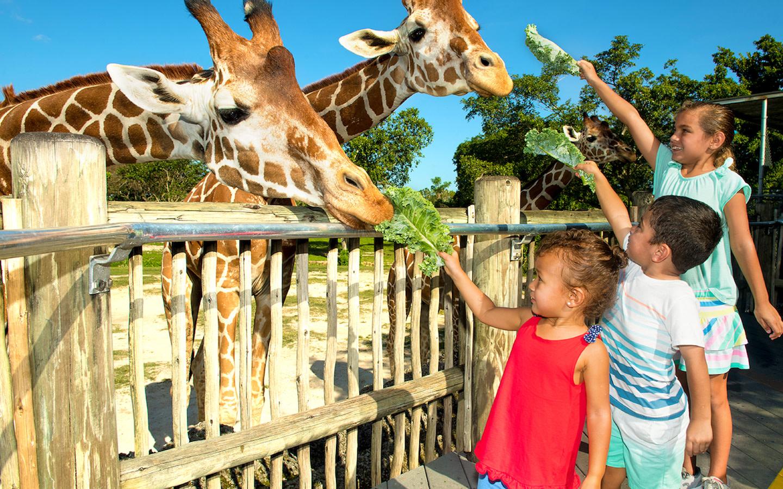 Amazing Wildlife Attraction in Miami